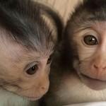นักวิทยาศาสตร์เพาะพันธุ์ลิงออทิสติกชุดแรกของโลก