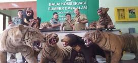 รมต.อินโดนีเซียยอมบริจาคซากสัตว์สตัฟฟ์ หลังถูกวิจารณ์หนัก